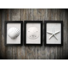 Cottage Chic Set of Beach Decor Wall Art, Coastal Decor, Nautical... ($55) ❤ liked on Polyvore featuring home, home decor, wall art, black home decor, seashell wall art, beach scene wall art, beach home accessories and white home accessories