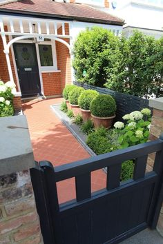 See this example of a recent garden design in Barnes, West London, from Harrington Porter, garden designers and landscapes in Planting Shrubs, Planting Plan, Japanese Plants, Front Path, Climbing Hydrangea, Narrow Garden, Path Ideas, West London, All Plants