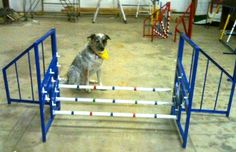 This is the best value dog agility triple jump you can find!  Compare with others and you will find none offer all the features at a competative price.  Why pay more or settle for less. Our AKC spec triple jump includes hinged wings that fold flat for easy storage and movement.  No extra charge for the wings. Aluminum construction with plastic jump cups.  Aluminum is easier to handle than a steel jump and it will not rust. Price $185.00…