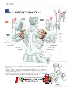 Press sentado con mancuerna. Para hombros. Más información en www.ejercicios.demusculos.com