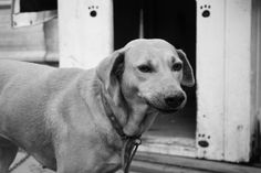 Pets | Blog 1855