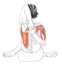 Gomukasana - La Vaca Si las escápulas no movilizan, puede haber demasiado movimiento en la unión gleno-humeral ... hacia arriba y la rotación hacia abajo de omóplato tiene que preceder la aducción para evitar sobre movilizar en la unión de hombro. Si las uniones de caderas no son suficientemente el momento de rotación móvil, excesivo puede causar las dislocaciones de rodilla. El gran cuidado debería ser tomado para evitar cualquier tensión en las rodillas, como el menisco es el más…