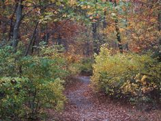 Directions - Clarence Schock Memorial Park At