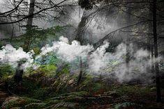 Baladez-vous dans les forêts féériques et mystérieuses de l'artiste Ellie Davis