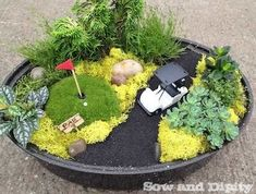 Mini garden golf green in an old roasting pan, more cool idea's for mini gardens in this post! #fairygarden