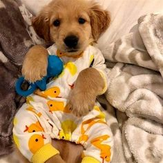 Find images and videos about dog, puppy and doggy on We Heart It - the app to get lost in what you love. Super Cute Puppies, Baby Animals Super Cute, Cute Baby Dogs, Cute Little Puppies, Cute Dogs And Puppies, Cute Little Animals, Cute Funny Animals, Cute Cats, Doggies