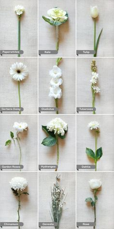 white wedding flowers :). Great for IDing all those flowers you love but never know the names - For more amazing finds and inspiration visit us at http://www.brides-book.com and join the VIB Ciub