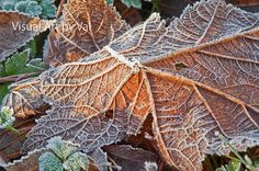 Instant Download Photo Macro of a Frosty Leafy by VisualArtbyVal