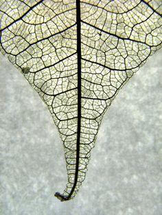 "elinka: "" leaf on ice By Mr. Mark   Mark """