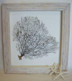 Ocean Coral Sea Fan Natural Black  Framed In White by Artsytiques, $189.00