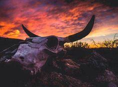 """Bones and Fire"" Sunset Photography in Lordsburg, New Mexico by Jenny K, Thomas Photography. www.jennykthomas.smugmug.com Purchase Original Fine Art Landscape Photography | Expressive Landscapes | Sunrise and Sunset | Lightning | New Mexico"