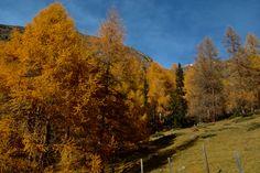 Austria, Hiking, Country Roads, Pictures, Travel, Walks, Photos, Viajes, Destinations