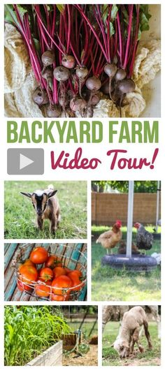 backyard-farm-video-tour-pinterest
