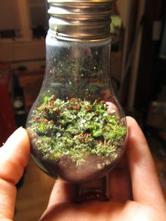 The Lightbulb terrarium- This site tells you how to make TONS of different terrariums (not just the lightbulb one)