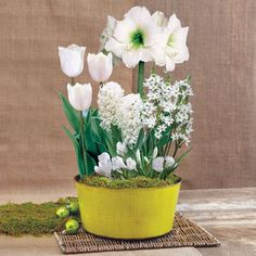 Grand Winterland Bulb Garden: A Winter Wonderland made of BLOOMS! This festive bulb garden includes 1 White Mini Amaryllis, 3 White Fringed Daytona Tulips, 2 White Pearl Hyacinths, 5 White Crocus, and 7 Star of Bethlehem, for a total of 18 bulbs. Extremely easy to grow and endlessly beautiful, this gift will bring a welcome touch of spring to the winter season.