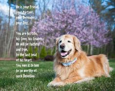 Oh my goodness....tears. How beautiful and of course with a golden it doesn't get any better.
