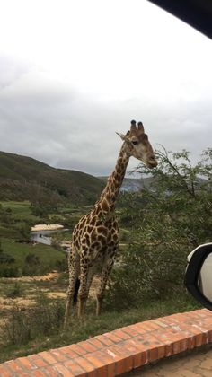 Botlierskop offers luxury safari lodges, villas and game drives. Located on a Private Game Reserve within the scenic Garden Route South Africa. Giraffe, Elephant, Private Games, Game Reserve, Impala, Lodges, South Africa, Safari, Wildlife