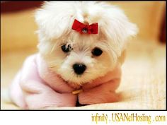 Maltese puppy with a bow Animal HD desktop wallpaper, Dog wallpaper, Puppy wallpaper, Maltese wallpaper - Animals no. Cute Dog Wallpaper, Tier Wallpaper, Animal Wallpaper, Puppies Wallpaper, Wallpaper Wallpapers, Computer Wallpaper, Screen Wallpaper, Cute Dog Photos, Cute Animal Pictures