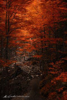 Autumn in Wytch Wood…by  Mel Sinclair