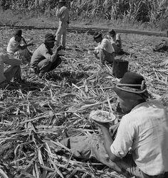 1941,almorzando cortadores de caña.Arecibo P.R.