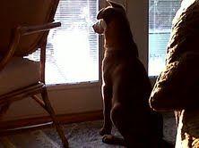 My Enzo - damn  squirrels!!!