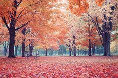 Autumn in Toronto Canada. [OC] [30722048] #reddit