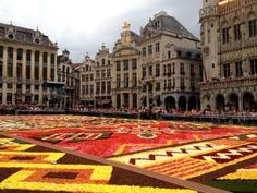 The Brussel's Floral Carpet is Made of Begonias and Dalhias. Belgium is the largest producer of these flowers with more than 60 000 000 begonia tubers a year.