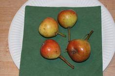 Julidechantsbirne, Ernte: VII, nicht lagerfaehig, robust, schmelzend aber nicht saftig, wuerzig. Grosser Baum fuer geschuetzte Lagen, jaehrlich und sehr fruchtbar
