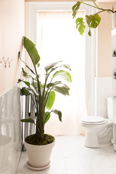 No matter how large or small your bathroom, you don't have to restrict yourself to hanging air plants and tiny potted greens. Peach Bathroom, Tropical Bathroom, Bathroom Colors, Bathroom Ideas, Bathroom Marble, Bathroom Updates, Kitchen Colors, Bathroom Designs, Bathroom Inspiration