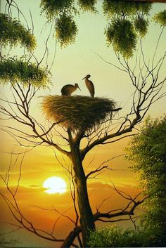 Beautiful Nature In the Morning. Pretty Birds, Beautiful Birds, Animals Beautiful, Nature Pictures, Beautiful Pictures, Beautiful Images Of Nature, Image Nature, Beautiful Sunrise, Beautiful Morning