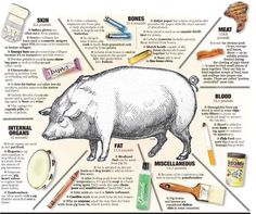 #Pig05049 - Twitter Search