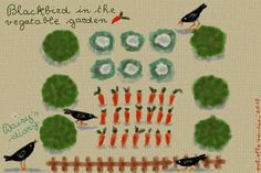 Cani in Cornice: Blackbirds in the vegetable garden...Daisy's diary...by Gabriella Vantini