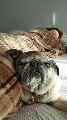 Charlie sheen with his pug pug love pinterest charlie sheen good morning thecheapjerseys Gallery