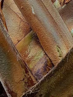 Nature Background  - tree bark