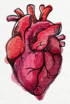 anatomically correct heart illustration - Google Search