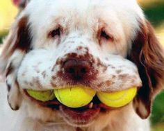 Image detail for -Dogs And Tennis Ball12 Dogs And Tennis Ball