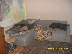 Gawęda jak nasze psy i koty: Nasza psia codzienność
