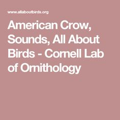 American Crow, Sounds, All About Birds - Cornell Lab of Ornithology