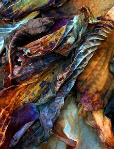 Remains of Autumn - Malabrigo. Wow, this would make a gorgeous watercolor painting