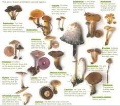 Mid Missouri Morels and Mushrooms: Mushrooms 101: Fall Mushroom Class