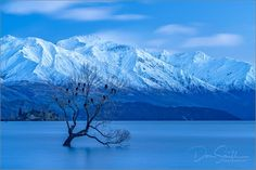 Don Smith Photography    Willow in Lake Wanaka, Southern Alps, South Island, New Zealand     Sony a7RII, Sony 70-200mm, f/13, 30 seconds, ISO 200