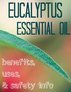 So many benefits and uses for eucalyptus essential oil - including lifting your spirits from depression and repelling insects! My Essential Oils, Essential Oil Perfume, Young Living Essential Oils, Eucalyptus Oil, Eucalyptus Essential Oil, Natural Healing, Natural Oils, Young Living Oils, Doterra Oils