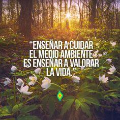 Enseñar a cuidar el medio ambiente es enseñar a valorar la vida.