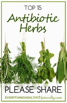 Top 15 Antibiotics Herbs ~ Medihealer Read More at: botgardening.blogspot.com
