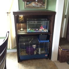 1000+ ideas about Guinea Pig Cost on Pinterest | Guinea Pigs ...