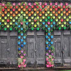 #color #plant pod #鉢植え #art #rainbow wall #ガーデニング #gardening(Via:  Rainbow Wall  )おぉ...これはきれい。ガーデニングにヤシマットをどうぞ。(^^)