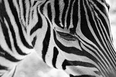Black and white in black and white | by MarisaAnn94