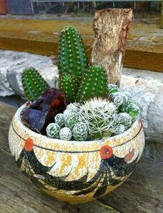 Cactus GMaceterar decorativa