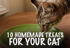 10 Homemade Treats For Your Cat
