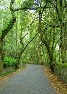 The uphill road to Castle of the Moors in Sintra, Portugal (by Daeveb).